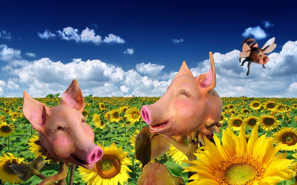 PigSunFlowers